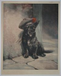 [Scottish terrier with beret.]