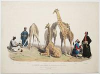 The Giraffes with the Arabs who brought them over to this Country.