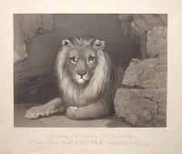 To the Committee of the Bristol and Clifton Zoological Society, This Portrait of their old Favorite Jupiter, is respectfully dedicated by the Publisher.