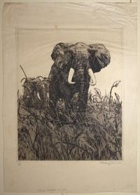 African Elephants in grass.