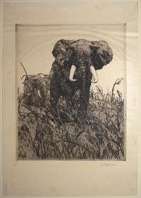 [African Elephants in grass].