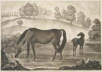 Miss Slamerkin, with her Colt Othello, now the famous Horse Black & all Black.. She was likewise ye Dam of L.d Portmor's Oroonoko.