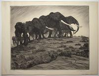 [Herd of Elephants].