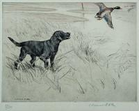 [Black Labrador in the marsh.]