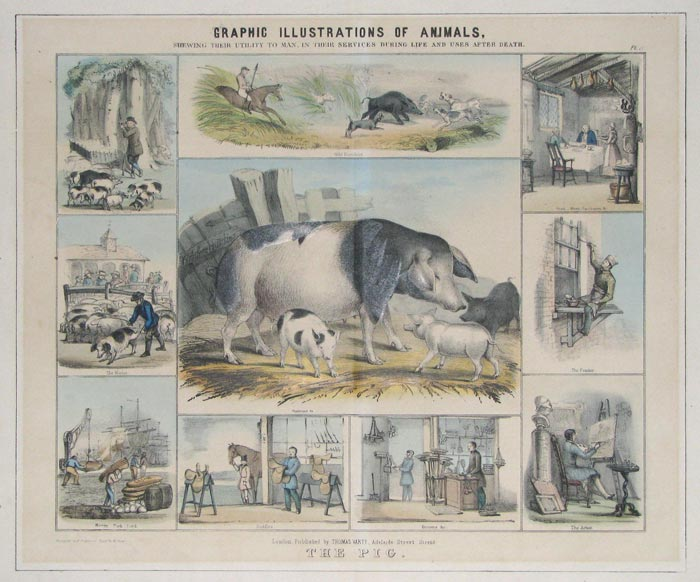Graphic Illustrations Of Animals, Shewing Their Utility To Man, In Their Services During Life And Uses After Death.