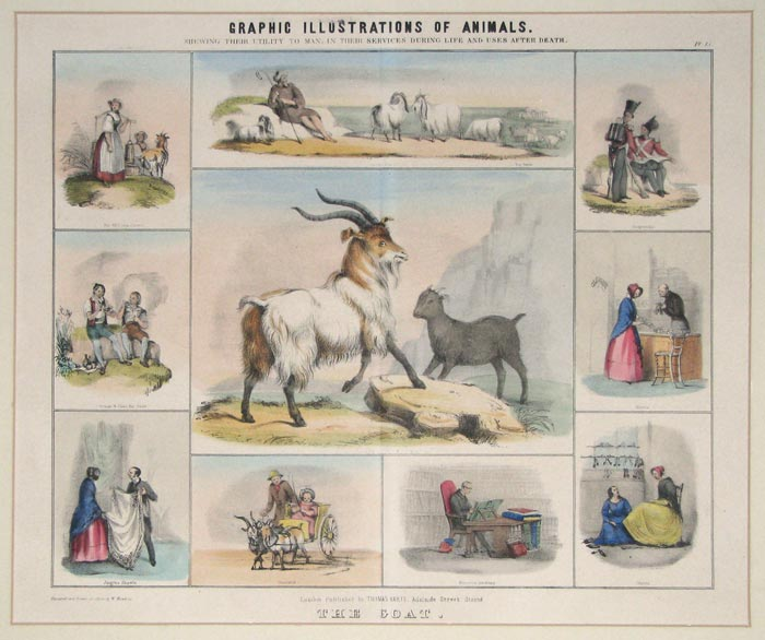 Graphic Illustrations Of Animals. Shewing Their Utility To Man, In Their Services During Life And Uses After Death.