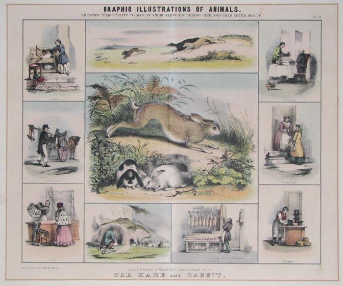 Graphic Illustrations Of Animals. Shewing Their Utility To Man, In Their Services During Life, And Uses After Death.