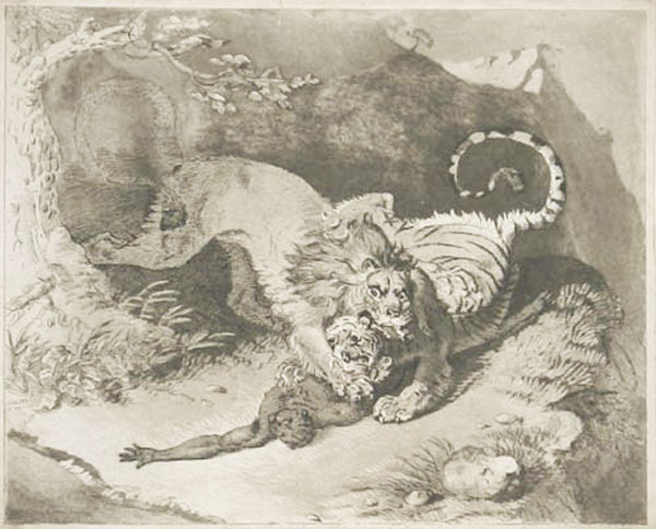 [A lion and tiger fighting over a native.]