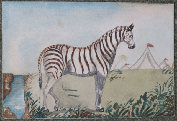 Burchell's Zebra, Africa. [in pencil on verso.]