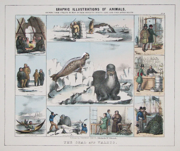 Graphic Illustrations Of Animals, Shewing Their Utility To Man, In Their Services During Life And Uses After Death. Pl. 18. The Seal and Walrus.