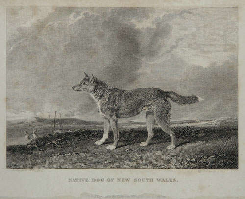 Native Dog of New South Wales.