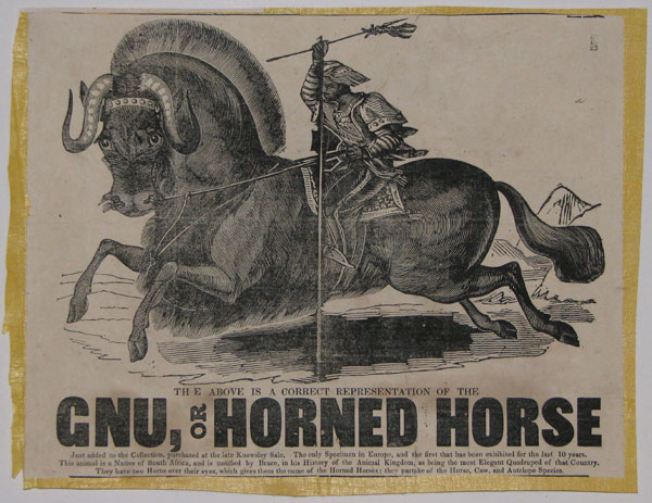The Above is a Correct Representation of the Gnu, or Horned Horse. Just added to the Collection, purchased at the late Knowsley Sale. The only Specimen in Europe, and the first that has been exhibited for the last 10 years. This animal is a Native of