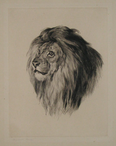 [Study of a lion's head.]