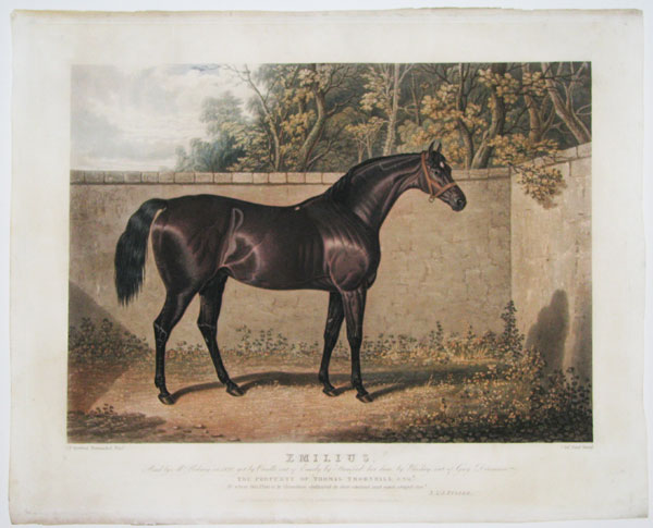 Emilius, Bred by Mr. Udney in 1820, get by Orville, out by Emily by Stamford her dam, by Whiskey, out of Grey Dorimant.