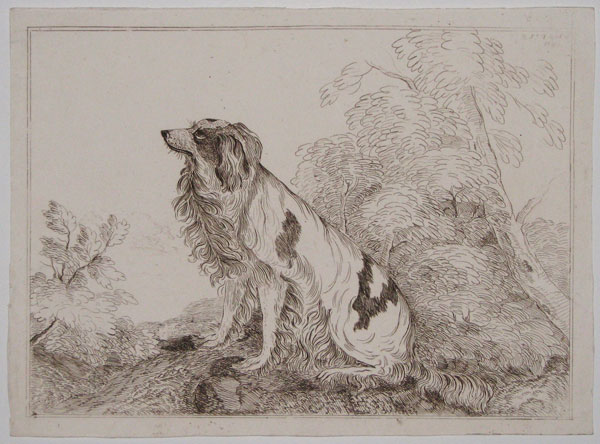 [A spaniel in a landscape.]