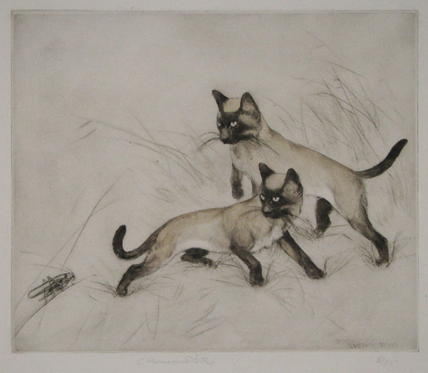 [Two Siamese kittens looking at a cricket.]