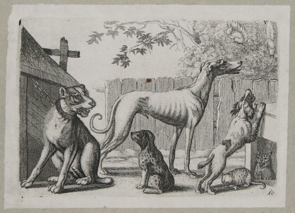 [Dogs and cats in a yard.]