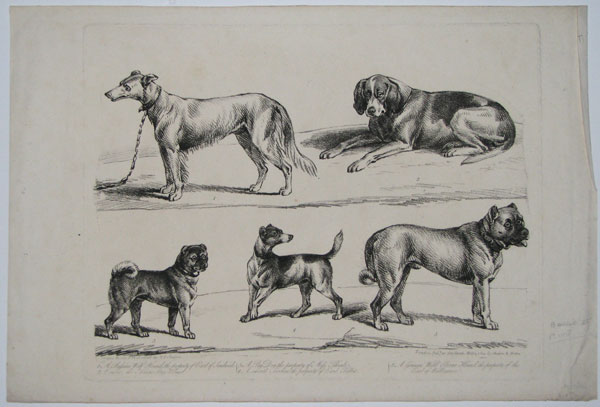 [Five dogs illustrated; single plate.]