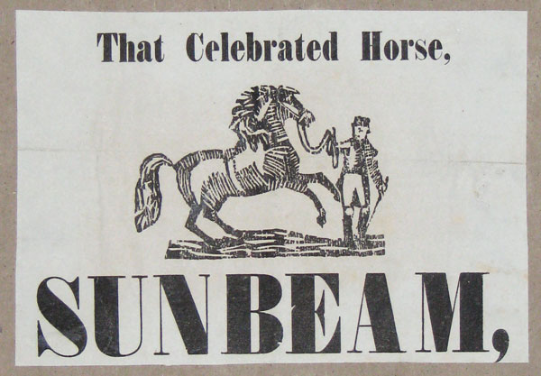 That Celebrated Horse, Sunbeam.