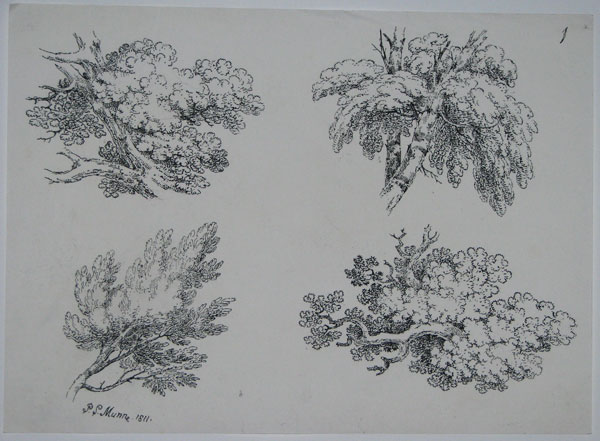 [Four studies of tree branches.]