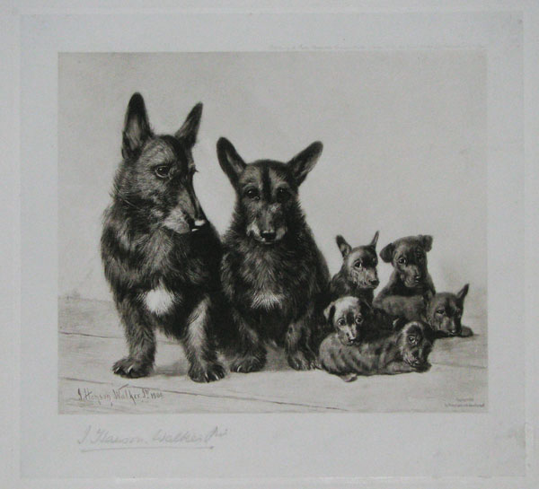 [A Scottish Terrier Family Group.]