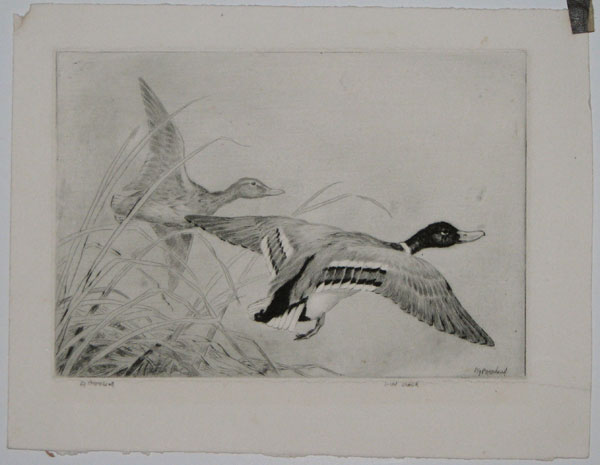 Wild Duck [pencil, lower right.]