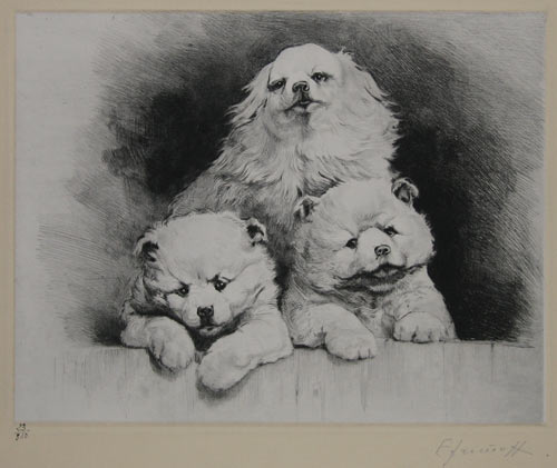 [Liberti] [Chihuahua and Two Chow Chow Puppies.]