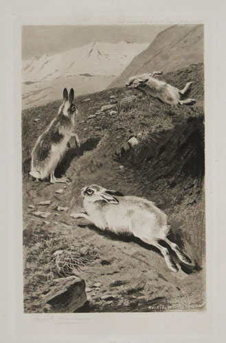 [Hares escaping.]