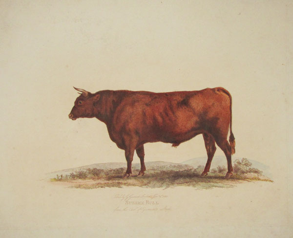 Sussex Bull from the Earl of Egremont's Stock.