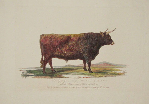 A Fat Highland Scotch Ox. Which Obtained a Prize at Smithfield Xmas 1805. Fed by Mr. Joiner.