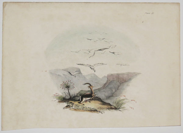 The wounded Blesbok. Plate III.