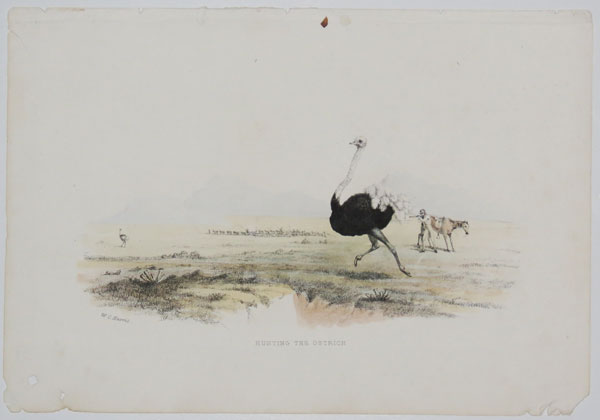 Hunting the Ostrich.