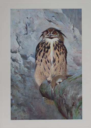 [The Great Horned Owl. Plate XX. (Bubo ignavus).