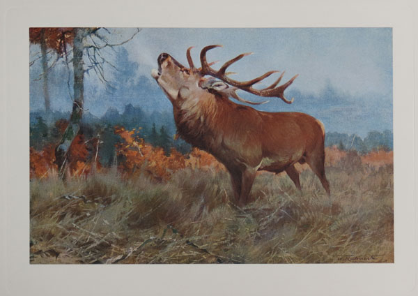[The Red Deer. Plate XXXIV. (Cervus elaphus).]