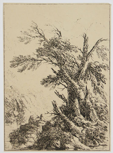 [Landscape with old trees by water.]