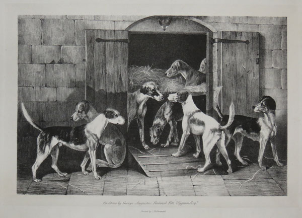 [Foxhounds outside their kennels.]