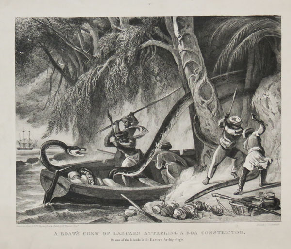 A Boat's Crew of Lascars Attacking a Boa Constrictor,