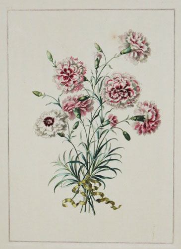 [Carnations.] No 23. [etched in reverse.]