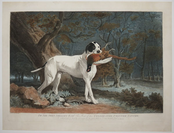 To Sir John Shelley Bar.t This Print of his Celebrated Pointer (Sancho),