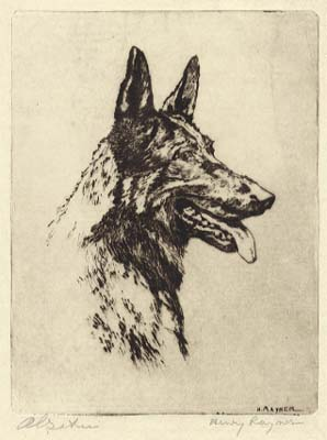 Alsatian [pencil]