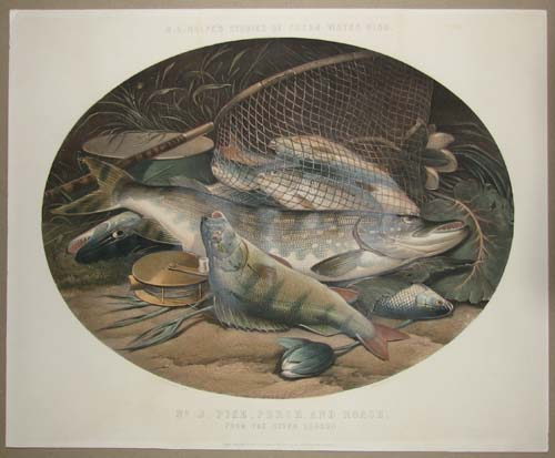 H. L. Rolfe's Studies of Fresh-Water Fish. No. 2 Pike, Perch, and Roach. From the River Loddon.