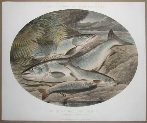 H. L. Rolfe's Studies of Fresh-Water Fish. No. 3 Salmon, and Trout. From the River Wye.