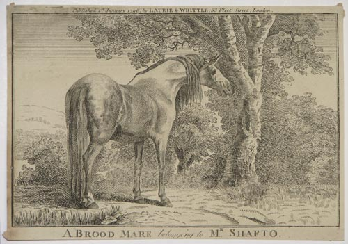 A Brood Mare belonging to Mr. Shafto.