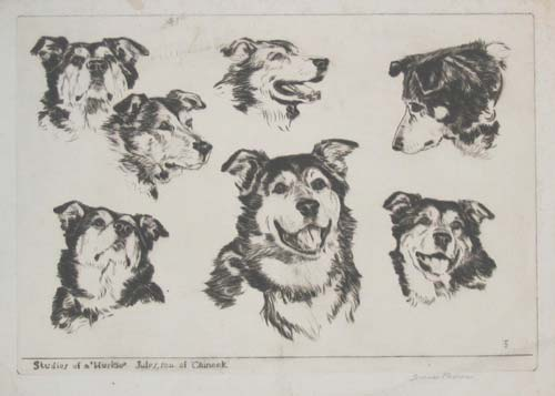 Studies of a 'Huskie'.  Jules, son of 'Chinook'.
