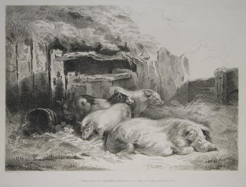 [A sow and three piglets in a sty.]