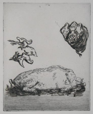 [Study of a sow.]
